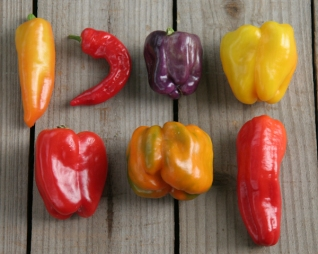 2015 pepper varieties
