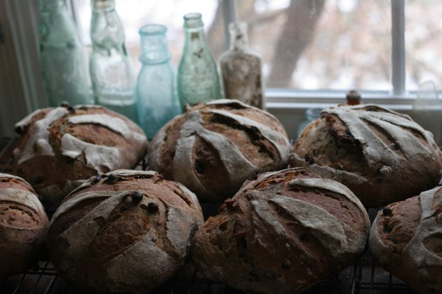 raisin rye, cooling by the window